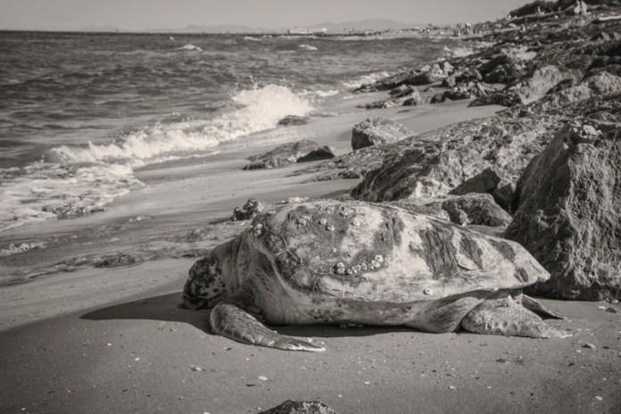 Se il mare non respira non può esserci vita
