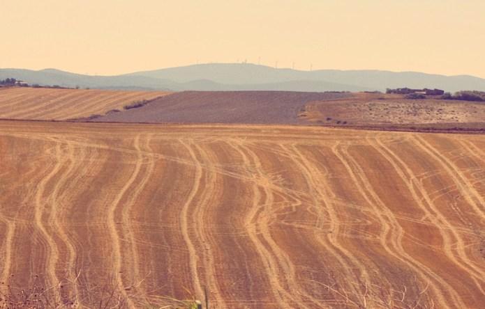 colline pisane
