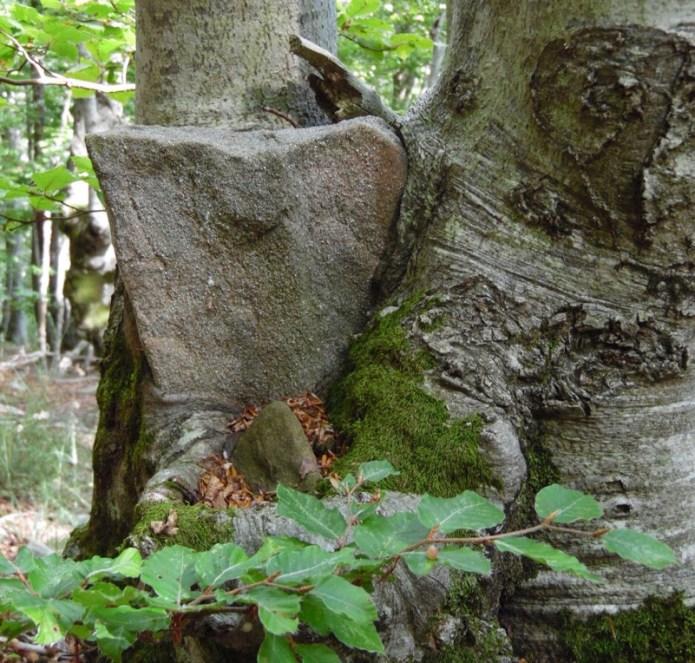 Alberi di pietra