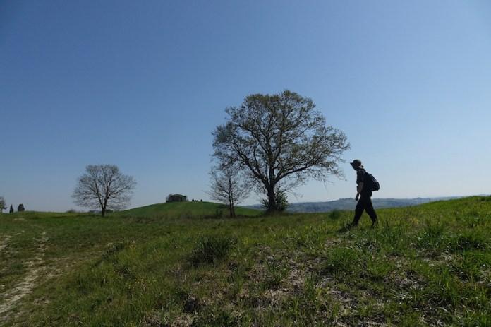 Colline della Valdelsa