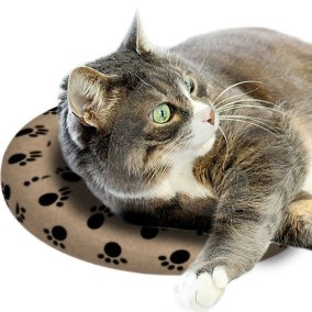 Cat Accessories SnuggleSafe