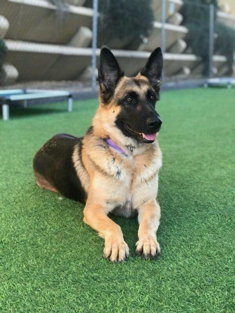 dog puppy adoptions at