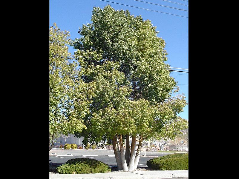 find plants bottle tree