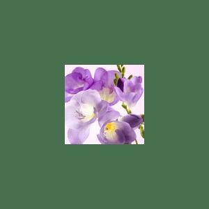 Freesia Fragrance Oil (1/4 ounce)