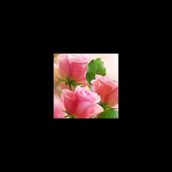Rose Garden Fragrance Oil ( Size A - 1/4 ounce)