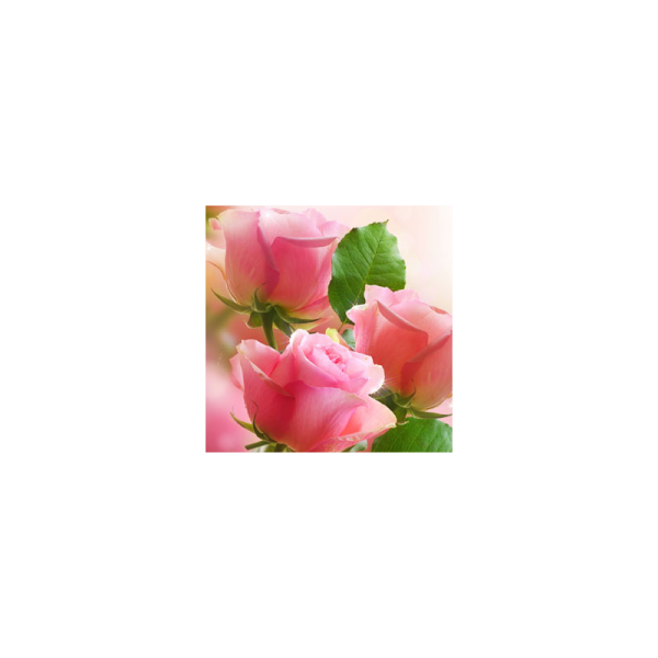 Rose Garden Fragrance Oil ( Size A - 1/4 ounce)