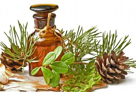 Pine Needle Essential Oil
