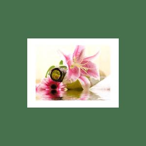 Love Spell Fragrance Oil