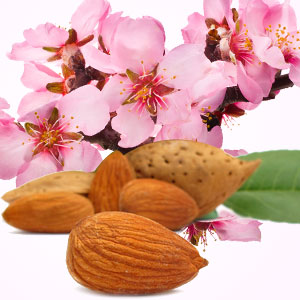 Almond Fragrance Oil ( Size A - 1/4 ounce)