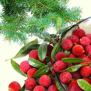 Bayberry Fragrance Oil (1/4 ounce)