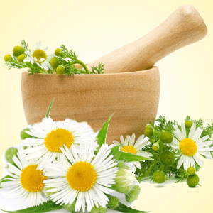 Chamomile Fragrance Oil ( Size A - 1/4 ounce)