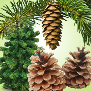 Christmas Pine Fragrance Oil ( Size A - 1/4 ounce)