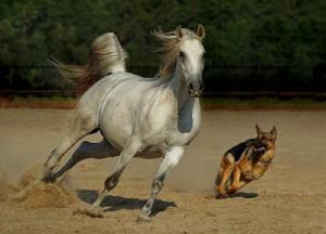 imagenes caballos y perro