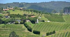 Nueva Zelanda celebra el 200 aniversario de la primera plantación de vid