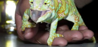 Reptiles mascotas