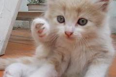 un gato pequeño en casa
