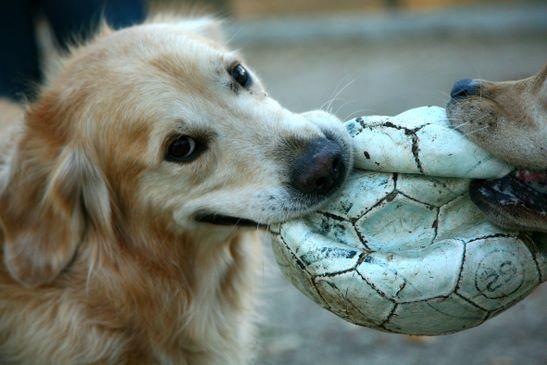 perros juegos