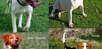 Adiestramiento-Perros de caza