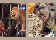 Exóticos-animales de circo