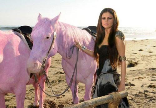 Sobre mascotas-caballos