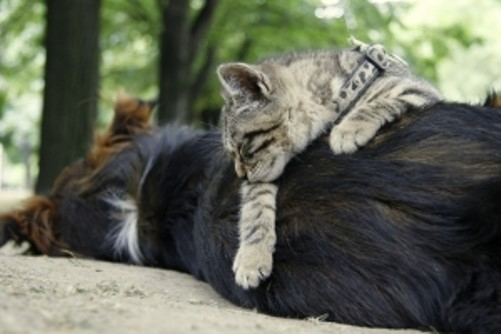 tener de mascotas a un perro y un gato