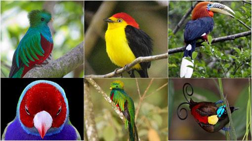 aves mascotas