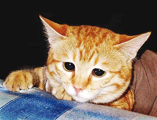 depresion felina