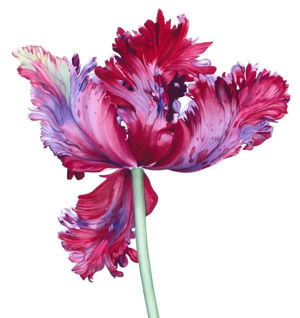 Elizabeth Hellman - Society Of Botanical Artists