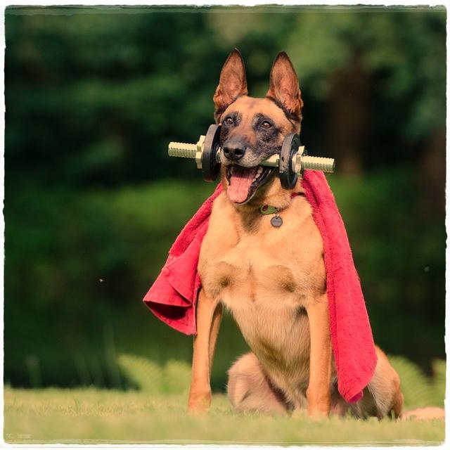 doggie3-crop