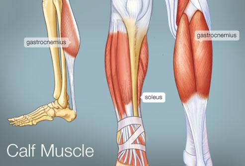 Calf-Muscles