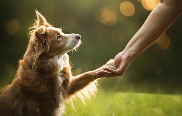 дружба между человеком и собакой
