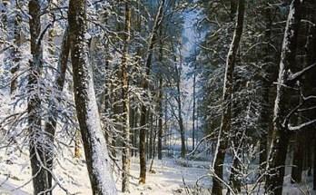 зима в лесу, иней на деревьях на картине Шишкина