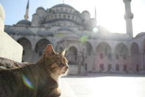 Cat-at-the-Masjid