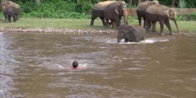 Must Watch: Baby Elephant Saves A Drowning Man !