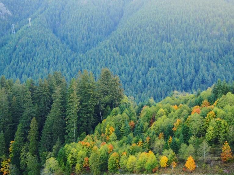 cleveland dam, vancouver, fall photos, instagram fall photos, photo spots for fall foliage in vancouver, autumn photo spots in vancouver