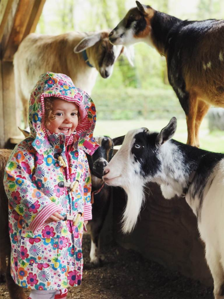 maplewood farm, things to do in vancouver in the rain,
