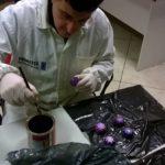 11075184 362995830570273 2890989528229773606 o 150x150 Laboratorio di espressione tecnico artistica: Decorazione lavoretti in gesso