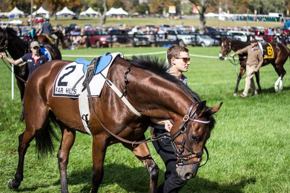 far hills horse race (17)
