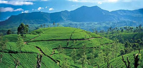 Sri-Lanka-Tea-Country