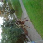 tips vindbaarheid zoekmachines: duidelijke layout voor spiders en bezoekers