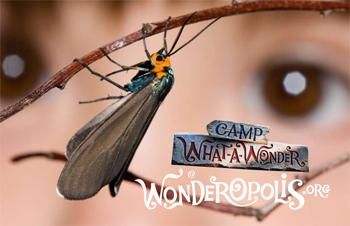 Camp What-A-Wonder