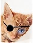 kitten-patch-avatar