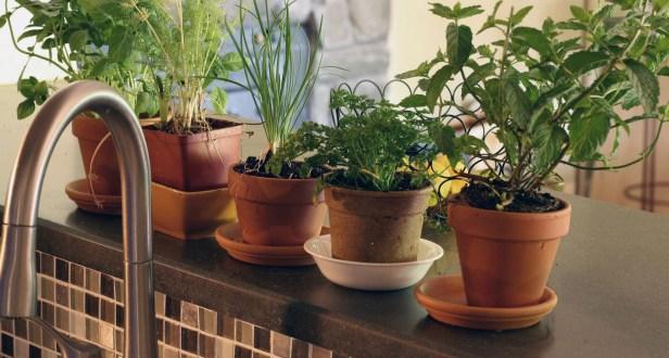Herbs to Grow Indoors