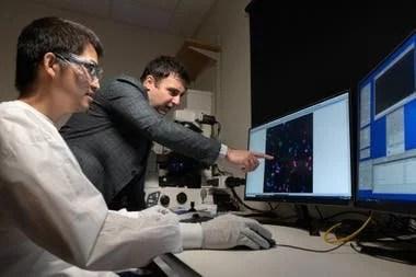 Chia-Heng Chu (sentado) y A. Fatih Sarioglu (parado) examinan células tumorales capturadas usando la trampa hecha con una impresora 3D