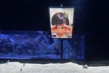 La convocatoria permitió analizar el comportamiento de las anguilas de jardín, que de a poco comenzaron a salir del fondo del estanque ante la presencia humana en las pantallas de las tabletas
