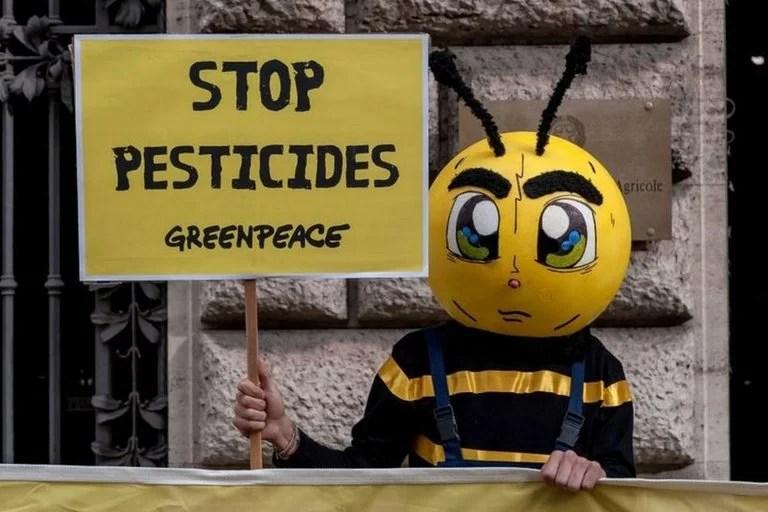 """""""Paren los pesticidas"""". Los químicos para el control de plagas suelen afectar a los polinizadores, como las abejas"""