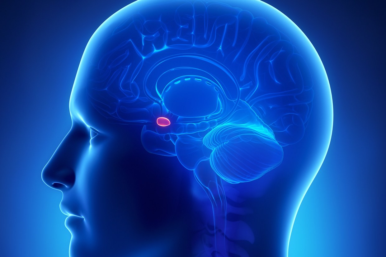 China aims at detailed 3D map of human brain