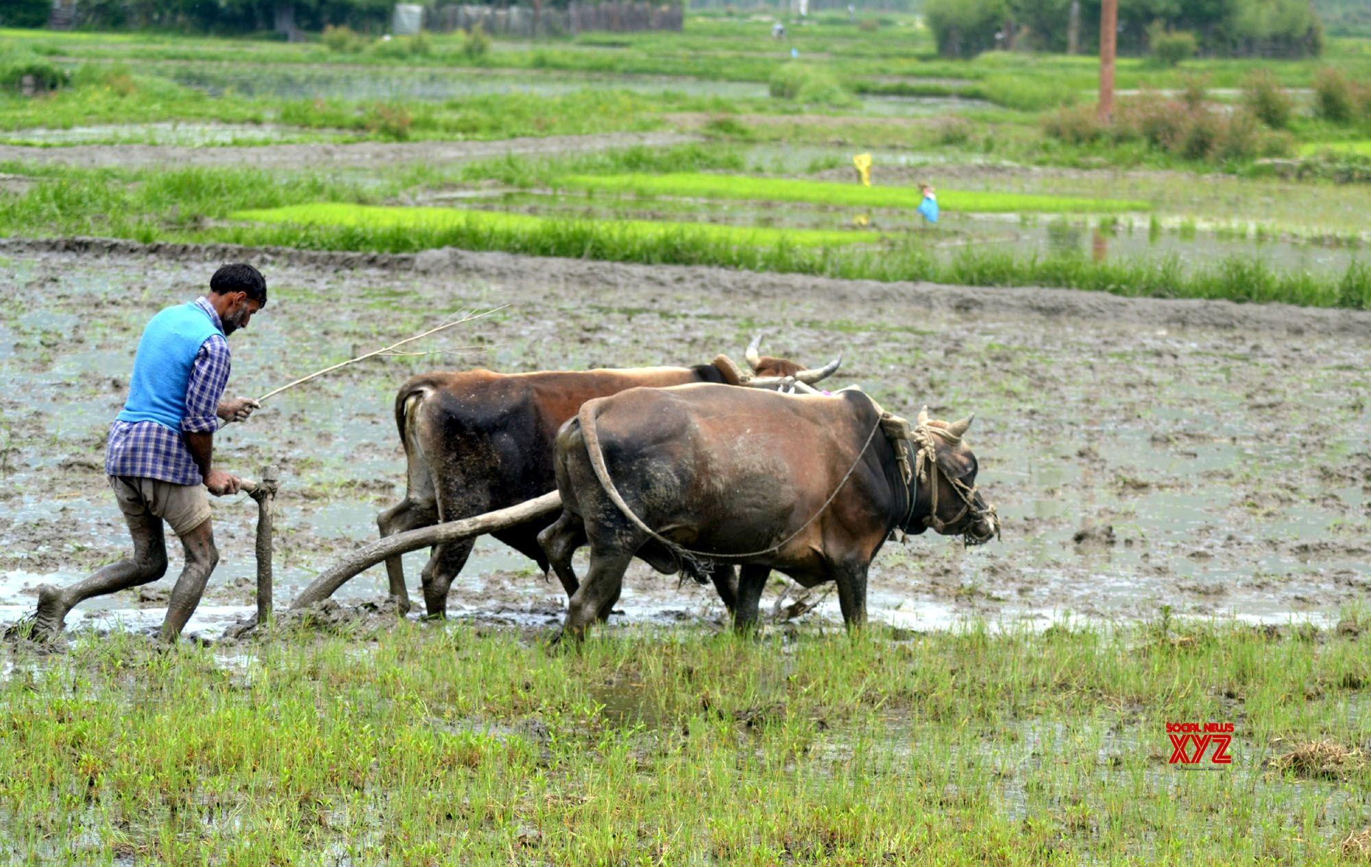 Tipplers seek status of par with farmers