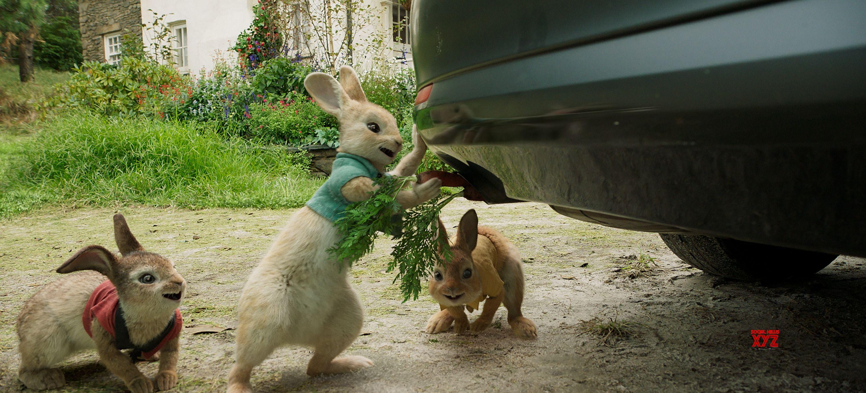「Peter rabbit movie」の画像検索結果