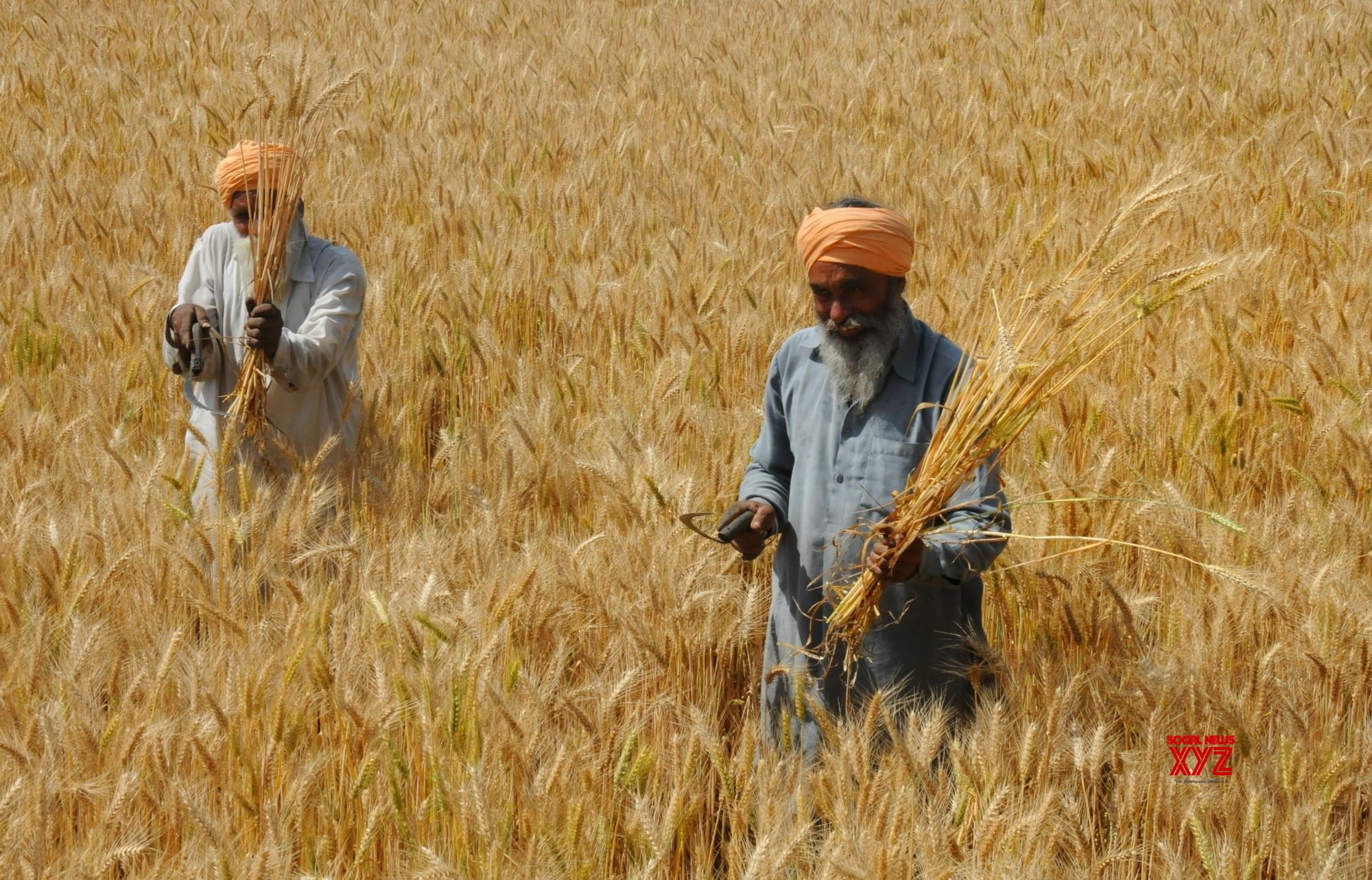 Foodgrain production to be record 279.51 million tonnes: Government